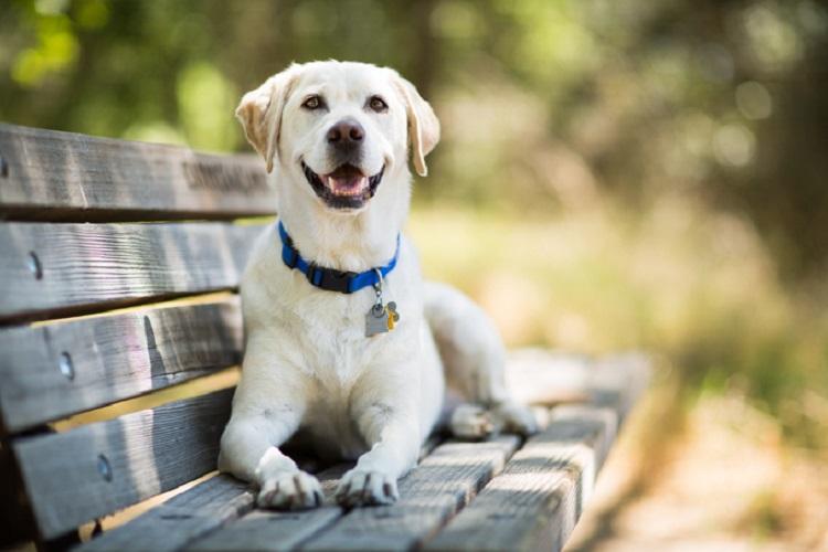 σκύλος, ΣΥΛΛΟΓΟΣ ΝΕΩΝ ΕΛΛΗΝΩΝ ΔΙΑΒΗΤΙΚΩΝ, υπογλυκαιμία,