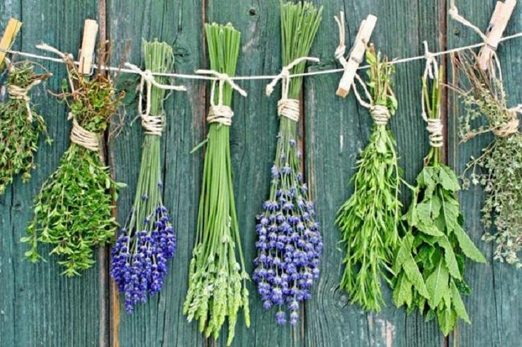 Διαβήτης: Τα βότανα – «σύμμαχοι» που πρέπει να εντάξετε στη Διατροφή σας