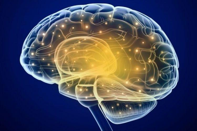 Διαβήτης και Κάπνισμα συνδέονται με ασβεστοποιήσεις στον ιππόκαμπο του εγκεφάλου