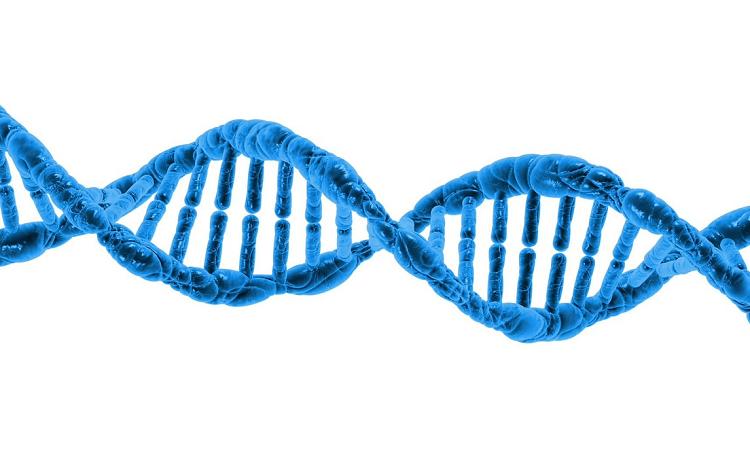 Στην οργάνωση του DNA μας κρύβεται η προδιάθεση για την εμφάνιση ασθενειών;