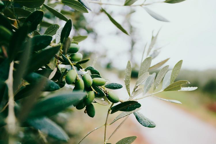 Ελαιόλαδο, μεσογειακή διατροφή & σακχαρώδης διαβήτης